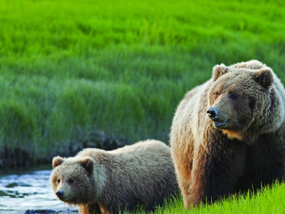 Page 7 of Discover Alaska with Princess