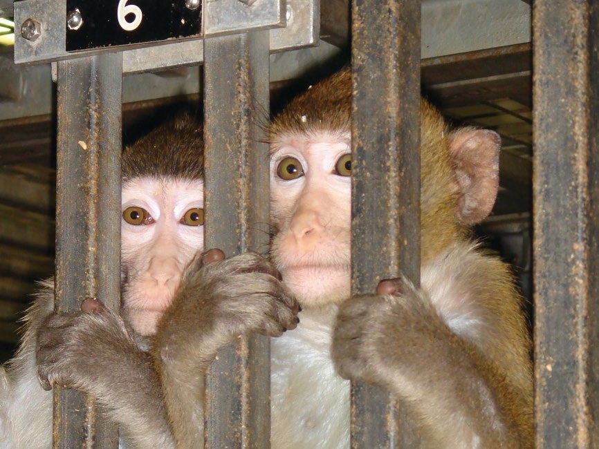 Page 114 of WORLD DAY FOR LABORATORY ANIMALS - APRIL 24th 2021