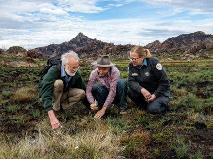 Page 22 of Conserving alpine habitats and species challenges, collections and collaboration