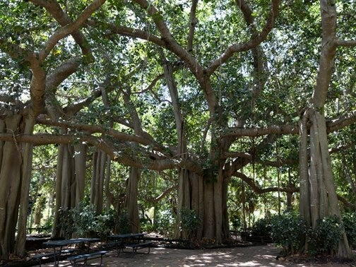 story from: THE BOTANIC GARDENer WINTER 2021 - Botanic gardens – Plant science in botanic gardens