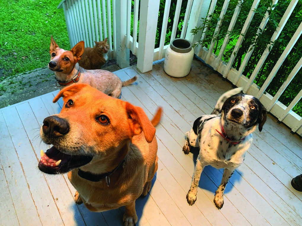 Page 6 of Reflections: My Family and Other Animals