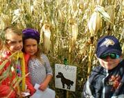 Page 14 of Montana Corn Maze